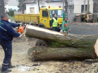Uklanjanje stabala