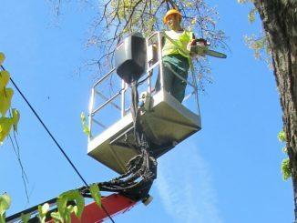 Orezivanje i uklanjanje stabala