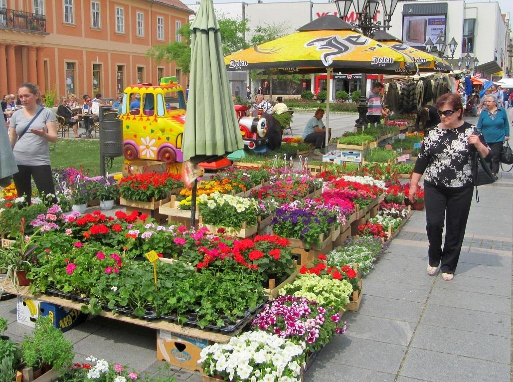 Sajam cveća u Somboru