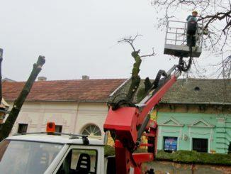 Uklanjanje stabala Sombor