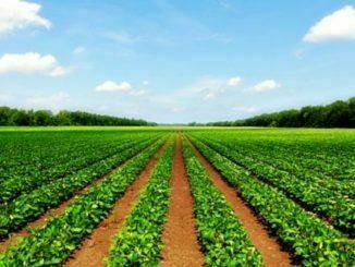 poljoprivredno-zemljiste-na-prodaju-u-srbiji-