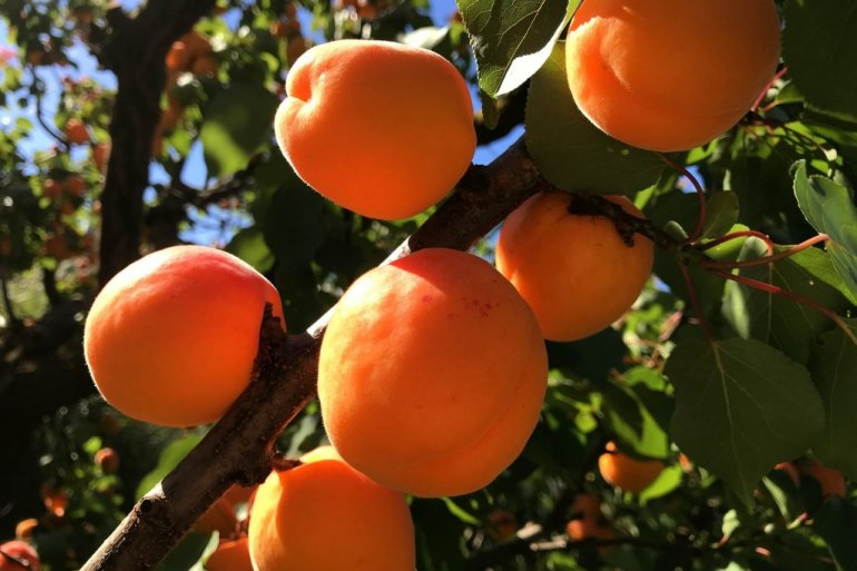 38150_fruit-3213068-1920_f