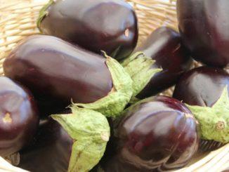 110915_eggplant-237448-1920_f
